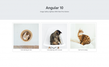 Angular 10 Image Gallery Lightbox with Next Prev Button