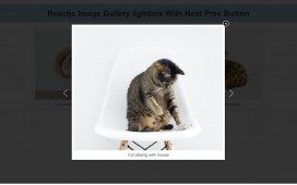 Reactjs Image Gallery Lightbox with Next Prev Button