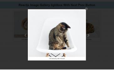 Reactjs Image Gallery Lightbox with Next Prev Button